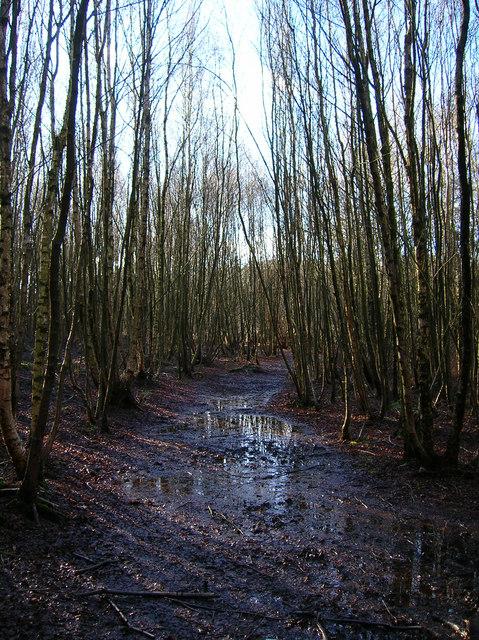 Muddy Footpath, Birchden Wood