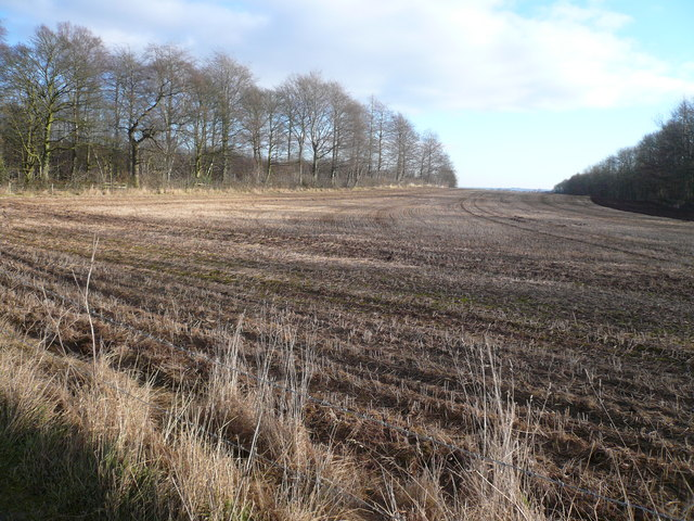 Farmland dividing Woodland