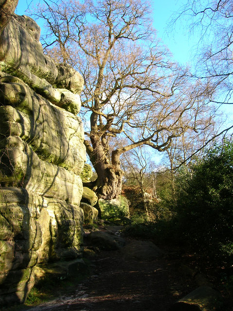 Oak Tree on Boulder, Harrison's Rocks