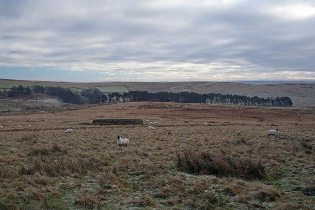 Sheepfold at Yatesfield