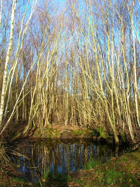 Pond, Birchden Wood