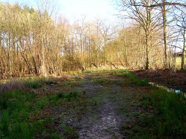 Dead End, Birchden Wood