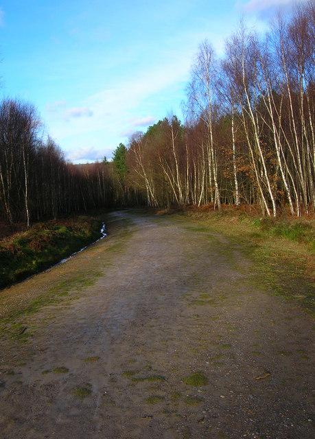 Main Track, Birchden Wood