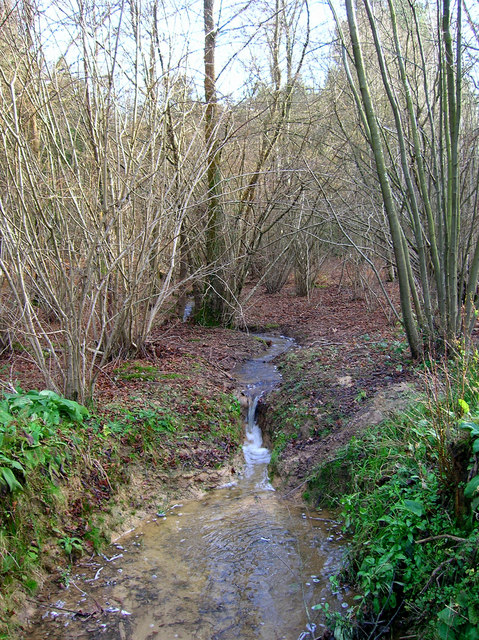Stream, Birchden Wood