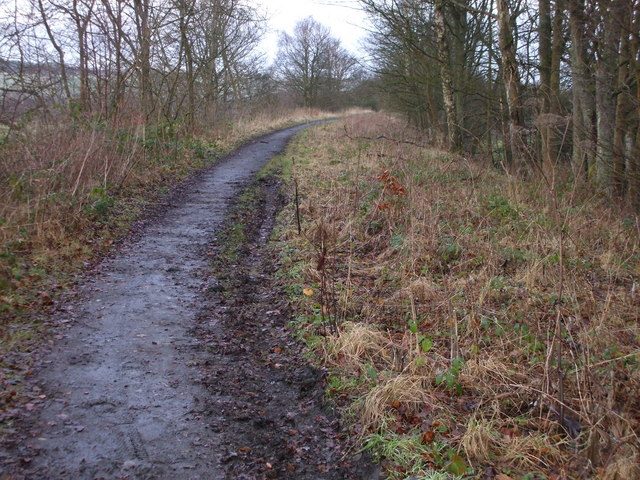 Trackbed, in Spring Wood