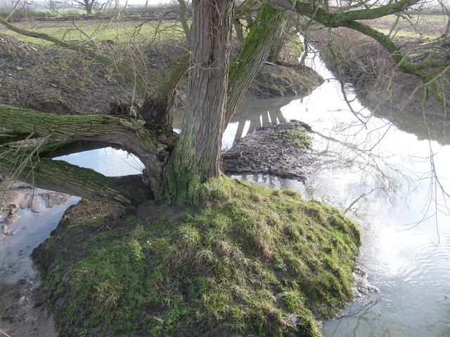 Oakley Brook