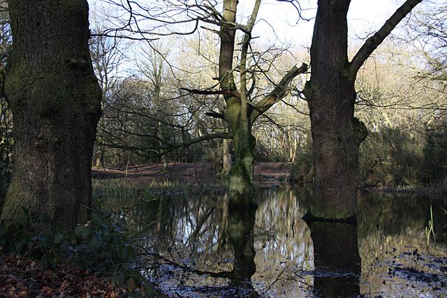 Sandy Heath Pond