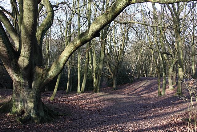 Hampstead Heath, North End