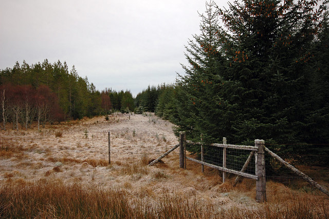 Small roadside clearing in Rimsdale Forest