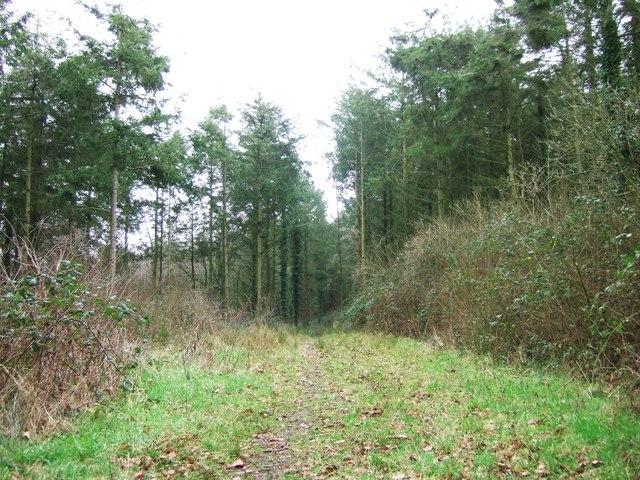 Dodscott Wood