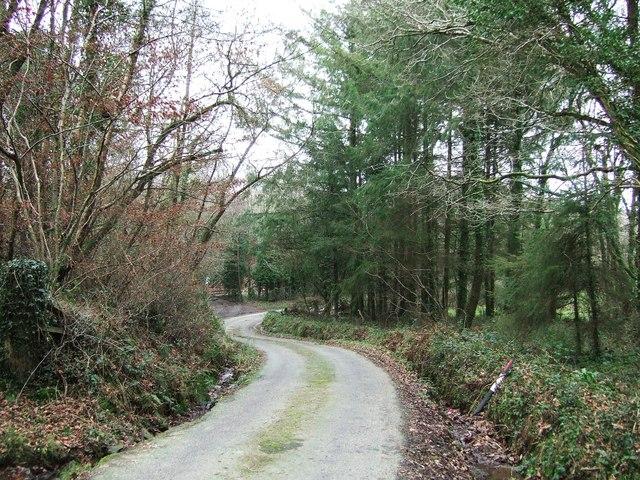 Lane near Dodscott Wood