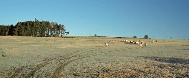 Soppit Farm