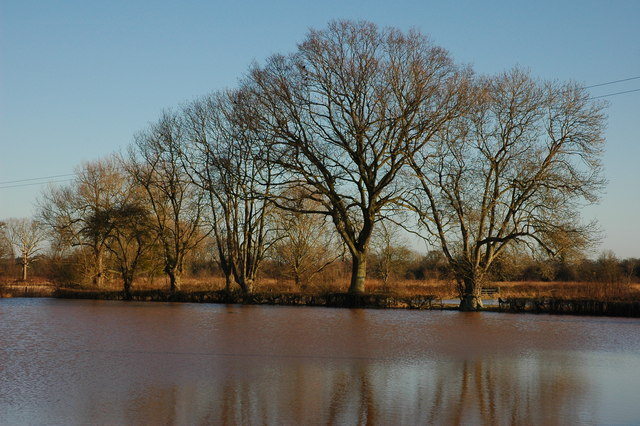Trees in floodwater at Baughton