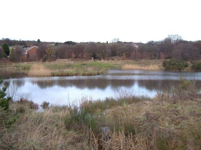 Old Brickworks Nature Reserve, Hednesford