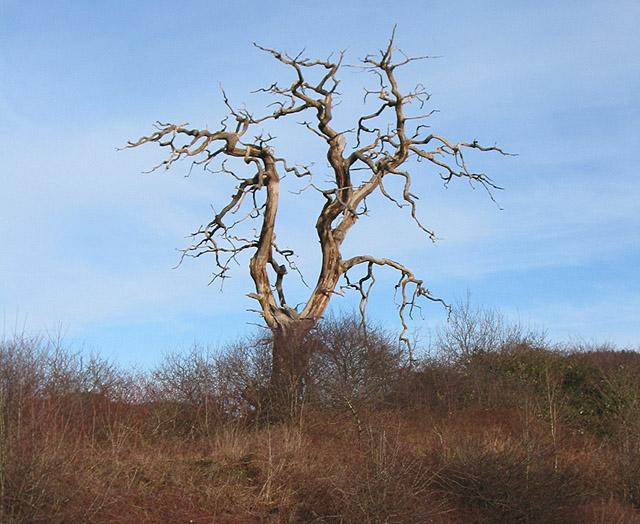Dead tree alongside the bypass
