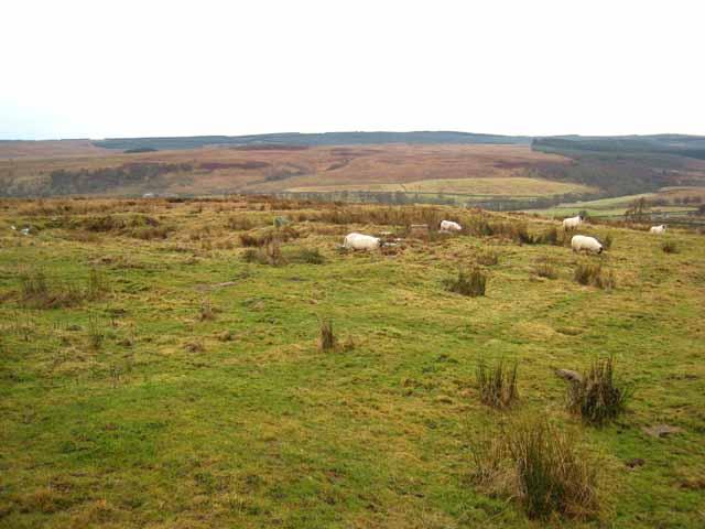 The site of Bellshiel Pit Cottage