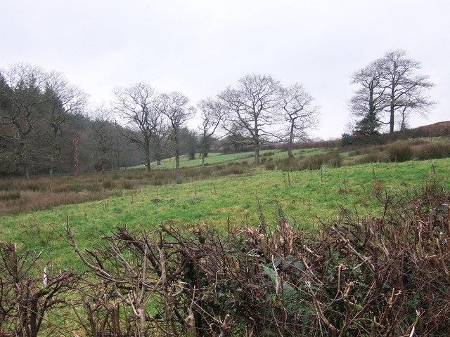 Fields near Dodscott