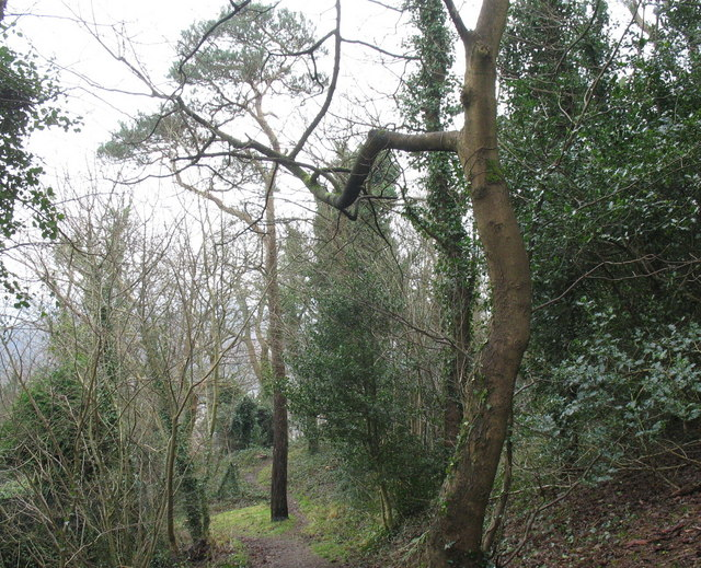 Woodland above Upper Garth Road