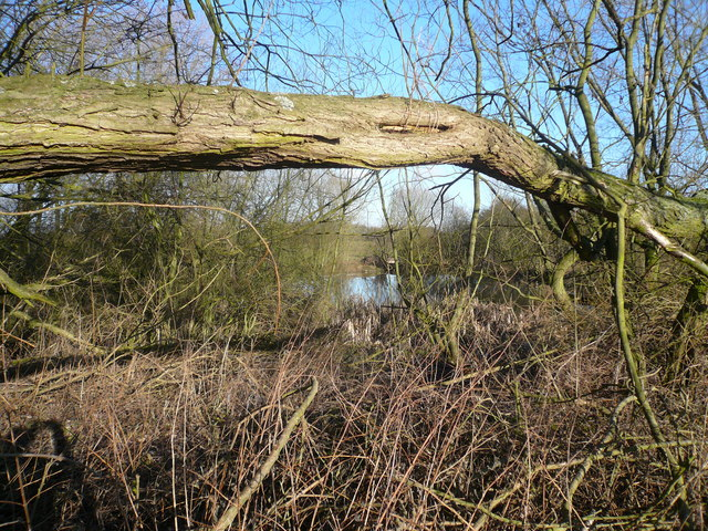Pond viewed from Footpath
