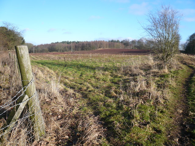 Langwith Wood view from Footpath