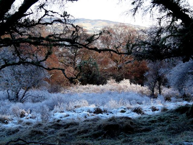 Frosty day near Gruids