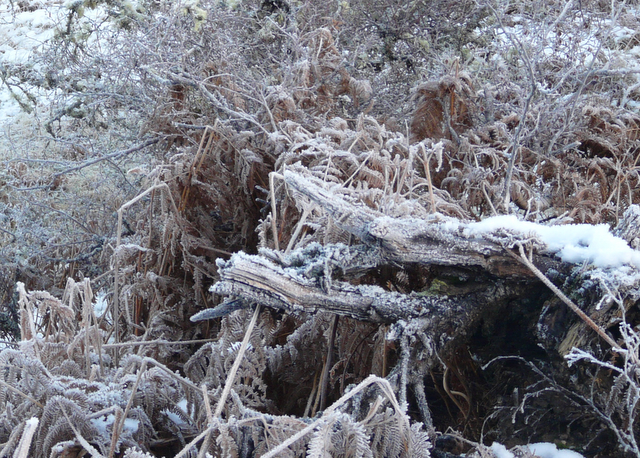 Frosty forest floor near Gruids