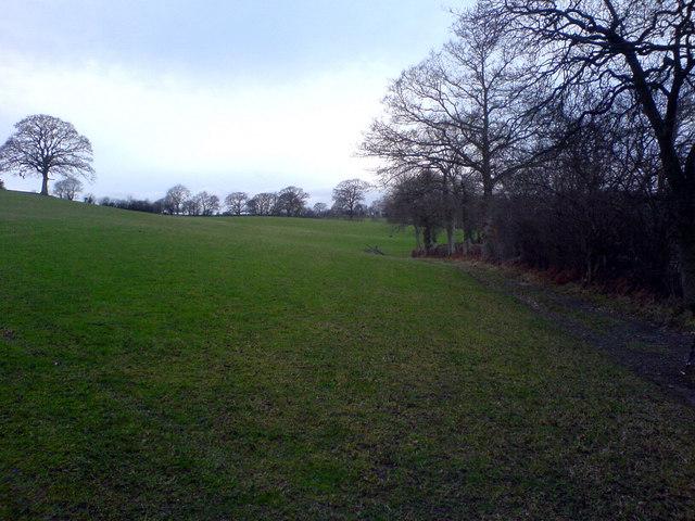 Sheep field near Yr-Eitha-Bach