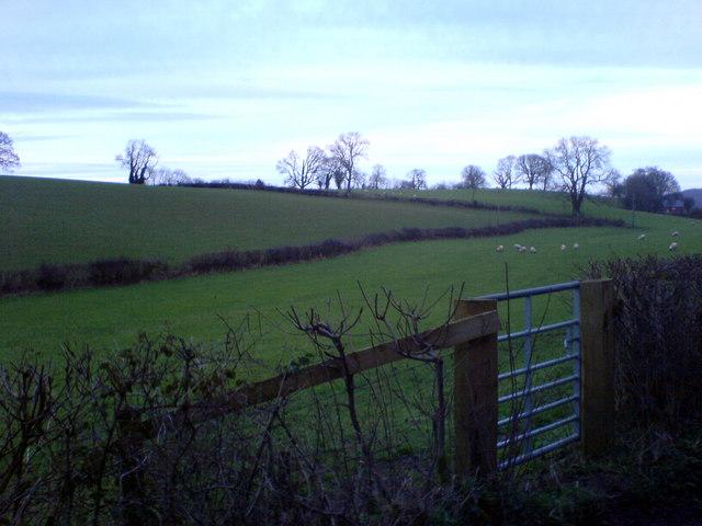 Bridle gate