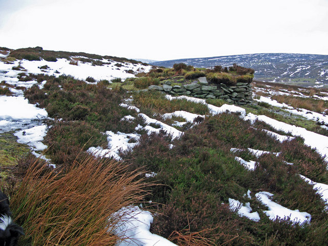 Grouse Butt, Nether Knowe