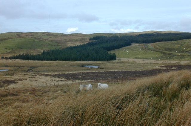Land around the Nant Rhuddnant