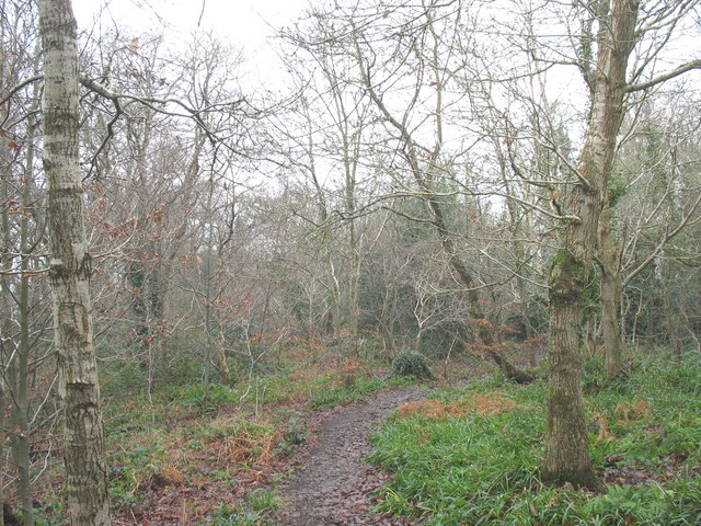 Woodland path in Coed Siliwen