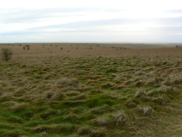 A view towards Little Hill, Salisbury Plain