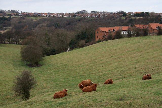 Pasture From Larpool Lane