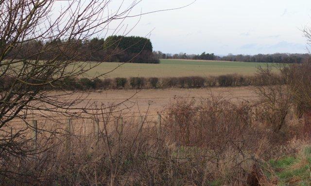 Fields, Sutton Down Farm
