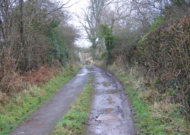 Bridleway Past Rachfynydd