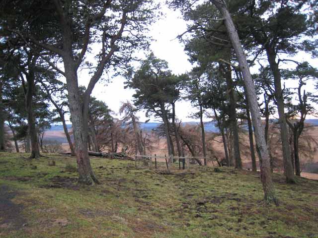Wood at Bellshiel