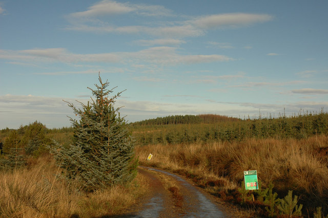 Forest track near the A9