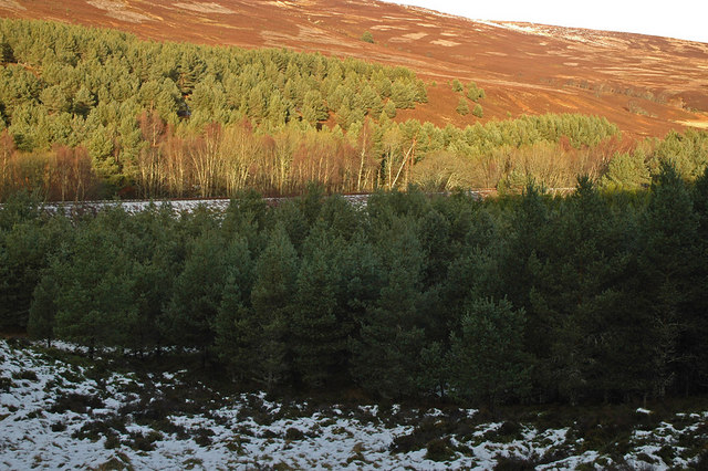 Trees and the Inverness-Perth railway