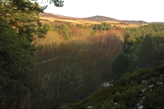 Edge of the forest and Inverness-Perth railway line