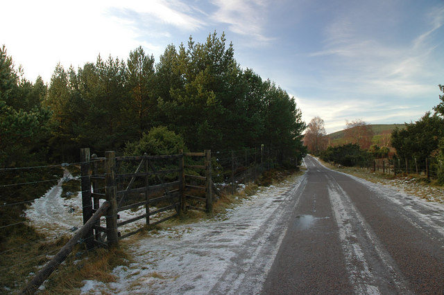 Gate and old forest track by the public road