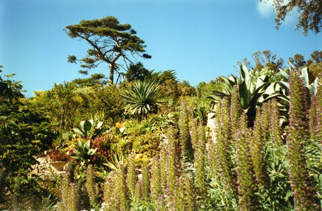 Abbey Gardens - Tresco
