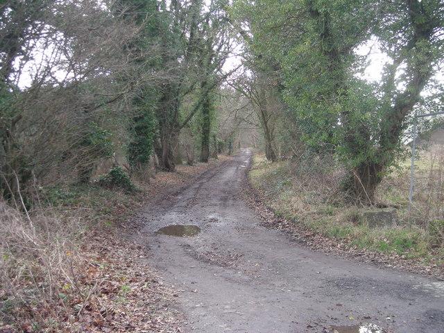 Track past Matthew's Coppice
