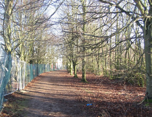 Woodland path next to developers fence