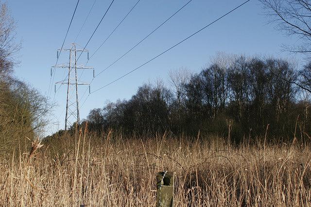 Pylons leading through Waveney Forest