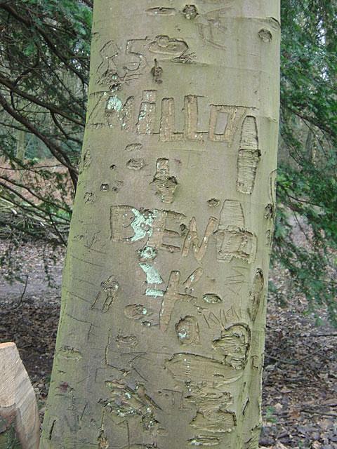 Bark Graffiti