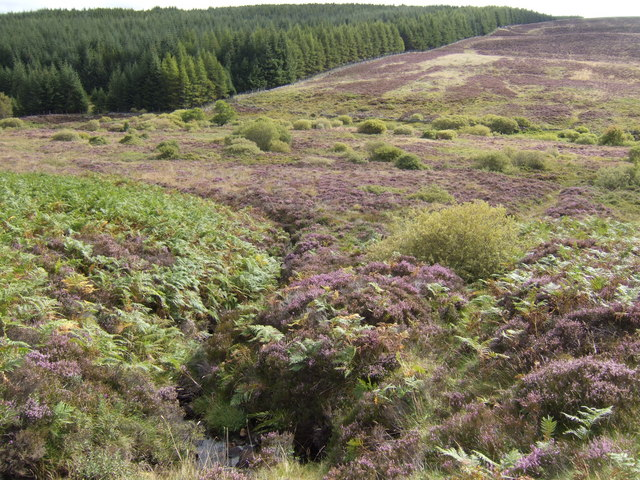 A rill in the heather