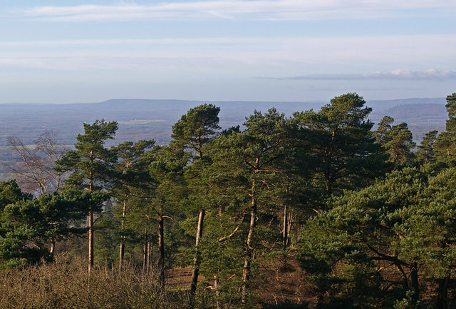 View from Leith Hill Tower (detail)