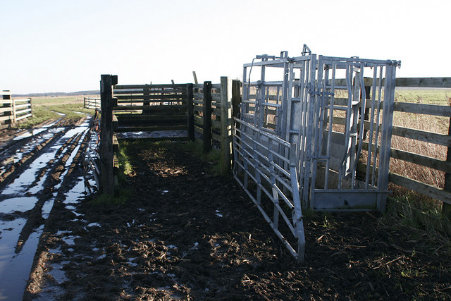 Cattle crusher and track leading on to Chedgrave Marsh