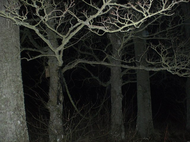 Trees with Flash