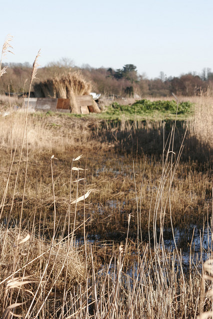 Cut reed bed